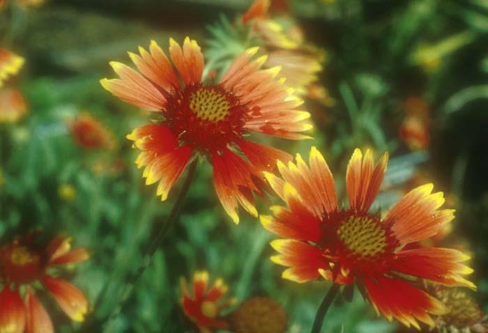Plants by Botanical Name