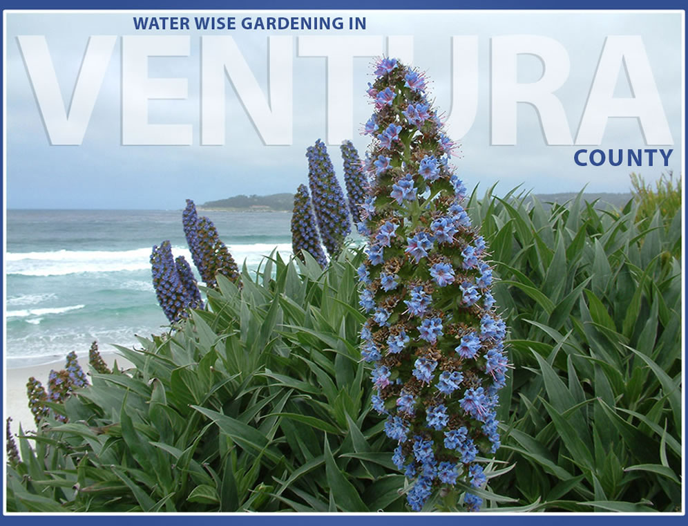 Water Wise Gardening In Ventura County